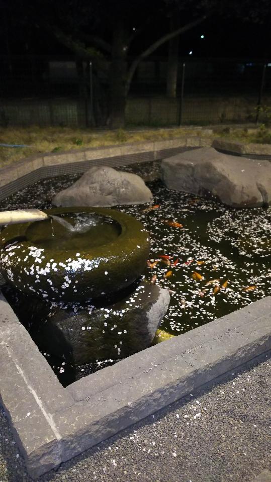 玉の湯 池に散った桜